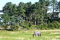 Paddock at Alnmouth - geograph.org.uk - 1514931.jpg