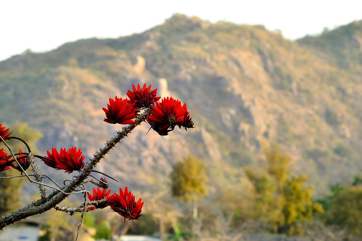 File:Palash flower.jpg - Wikimedia Commons