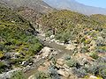 Palm Canyon water 1.jpg