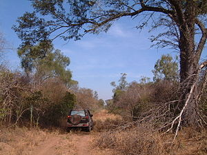 Immigration to Paraguay - Chaco region in Paraguay during the dry season.