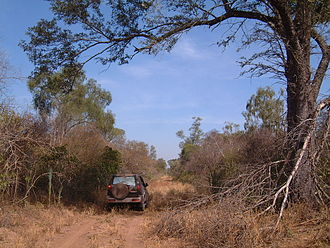 Gran Chaco - Alto Chaco, virgin forest in dry season