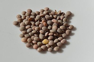 Pardina lentils.JPG