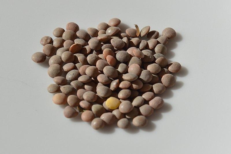 Fichier:Pardina lentils.JPG
