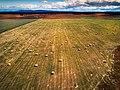 Patagonia hayfield (25356911597).jpg