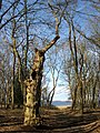 Path near Oud Valkeveen, leading to Gooimeer. Province of North Holland, Netherlands - panoramio.jpg