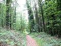 Path through Coed Pen-y-Bont woodland - geograph.org.uk - 461987.jpg