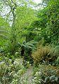 Pathway - Glendurgan Garden - Cornwall, England - DSC01922.jpg