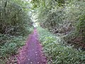 Paved path - Carpenters Down Wood - geograph.org.uk - 822651.jpg