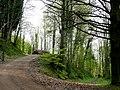 Penyard Park Woods 1 - geograph.org.uk - 1267841.jpg