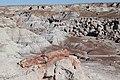 Petrified Logs in Blue Mesa.jpg