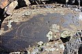 Petroglyphs from Ukhtasar 15092019 (36).jpg