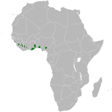 Phyllastrephus baumanni distribution map.png