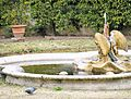 Pigeon and fountain in a garden.jpg