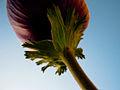 PikiWiki Israel 28680 Red Anemone.jpg