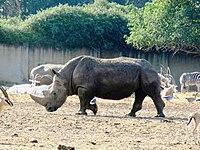 PikiWiki Israel 53088 wildlife animals.jpg