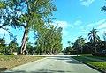 Pine Tree Drive Miami Beach - John S Collins 04.jpg