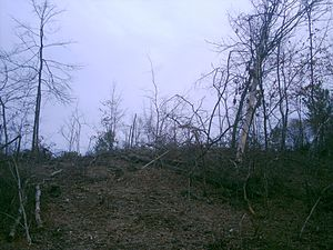 Newly cleared forest in East Texas. Most of the mature trees have been cleared and the litter layer—the bottom layer of decaying matter that enriches the soil with nutrients—of the forest has begun to wash away due to recent rains.