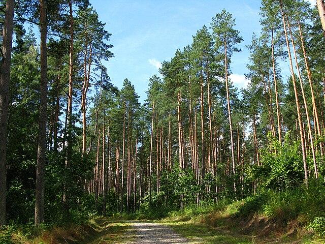 В этом году в государственных лесах Польши было зарегистрировано 6000 пожаров