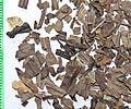 Plantaginis lanceolatae folium by Danny S. - 001.jpg