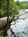 Plitvice Lakes, Croatia, Galovac jezero (2).JPG