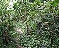 Poland. Warsaw. Powsin. Botanical Garden 127.jpg