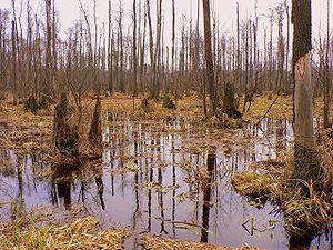 Kampinos National Park - Image: Poland Kampinos April 1