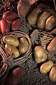 Pommes de terre Cl j weber01 (23309312639).jpg