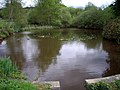 Pond, Holmbury St Mary - geograph.org.uk - 1285930.jpg