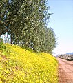 Primavera on the road - panoramio.jpg