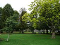Public gardens of Alton, Hampshire, England 7.jpg