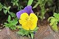 Purple with yellow flower.jpg