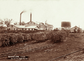 Queensland State Archives 2207 Isis Central Sugar Mill with cane and canetrucks 17 September 1896.png
