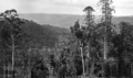 Queensland State Archives 366 Looking over Obi Obi towards Mapleton 1931.png