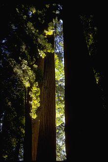 redwood nationalpark wikipedia. Black Bedroom Furniture Sets. Home Design Ideas