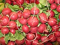 Radishes at Wilson Farm, Lexington MA.jpg