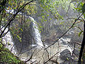 Rainforest 2 - Atherton Tableland, Queensland, Australia.jpg