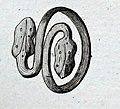 Recueil de monumens antiques planche 1 13468 (bague boulogne).jpg