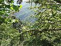 Reserva Natural Integral de Muniellos (Asturias, España) 11.JPG