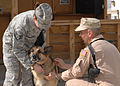 Retiring at Bagram, after 63 dog years -b.JPG
