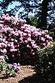 Rhododendronpark Bremen 20090513 030.JPG
