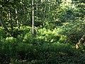 Riesenschachtelhalm im NSG Hellgrund.jpg