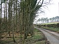 Roadside Woodland. - geograph.org.uk - 379371.jpg