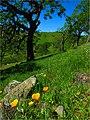 RockvilleTrails-Solano JorgFleige-WCB (18314827294).jpg