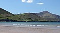 Rossbeigh Beach, Ring of Kerry (506494) (27170371144).jpg