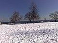 Rye, NY, USA - panoramio - morrivalas.jpg