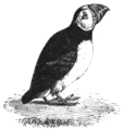 SMO V12 D698 Puffin.png