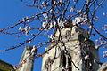 Saint-Saint-Étienne-le-Vieux floraison.JPG