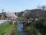 Sakura trees along the Taihei River 20160424b.jpg
