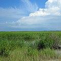 Salt marsh vista - Flickr - fishhawk.jpg