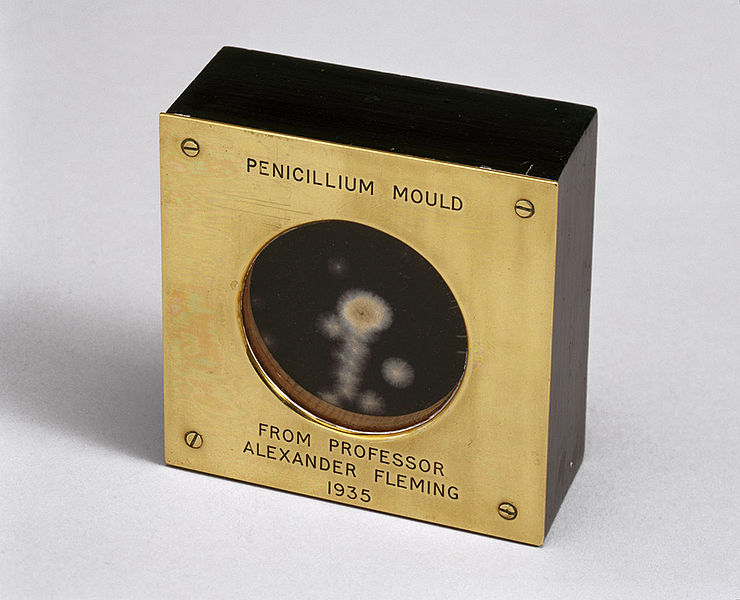 Fil:Sample of penicillin mould presented by Alexander Fleming to Douglas Macleod, 1935 (9672239344).jpg